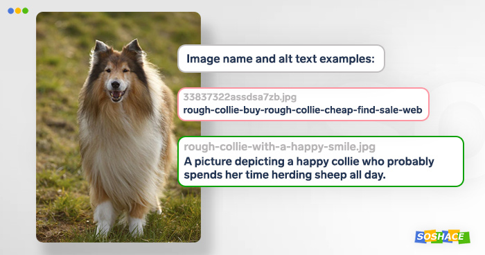Examples of how the image can be named and how it can be descirbed