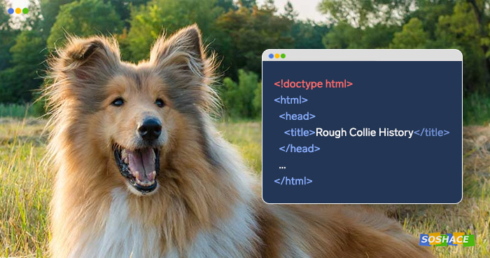Rough collie and a window with the page's source code