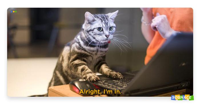 a stylized artwork of a hacker cat