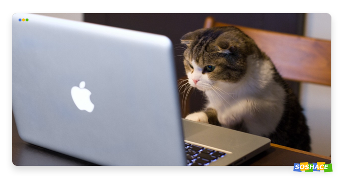 cat in front of a computer